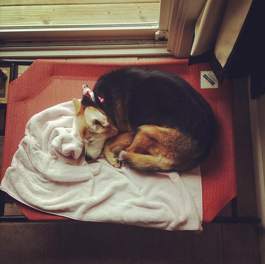chubby-dog-memorial-photoshoot-maria-sharp-suzanne-price-10