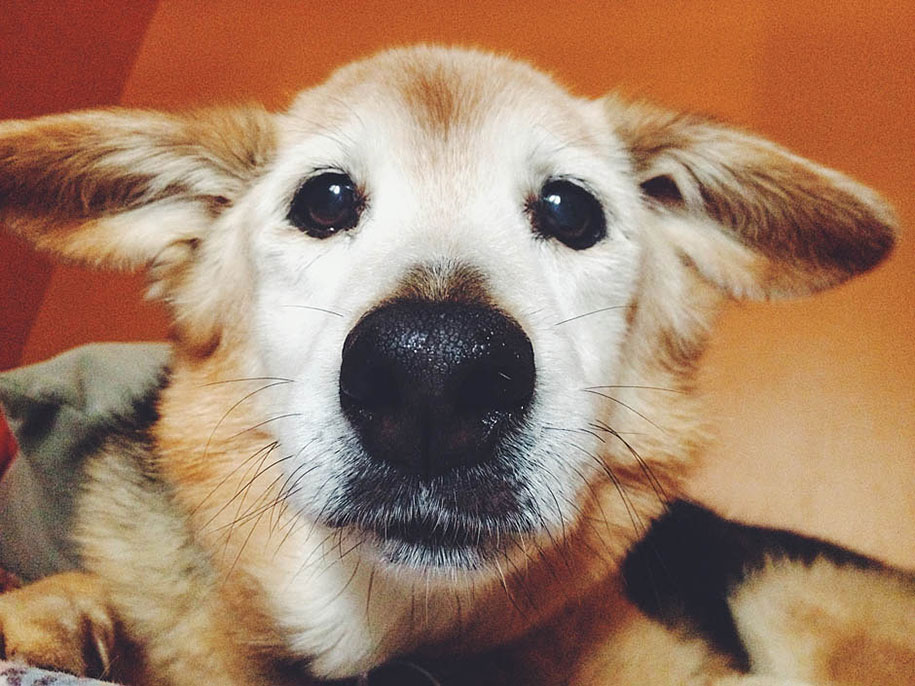 chubby-dog-memorial-photoshoot-maria-sharp-suzanne-price-12