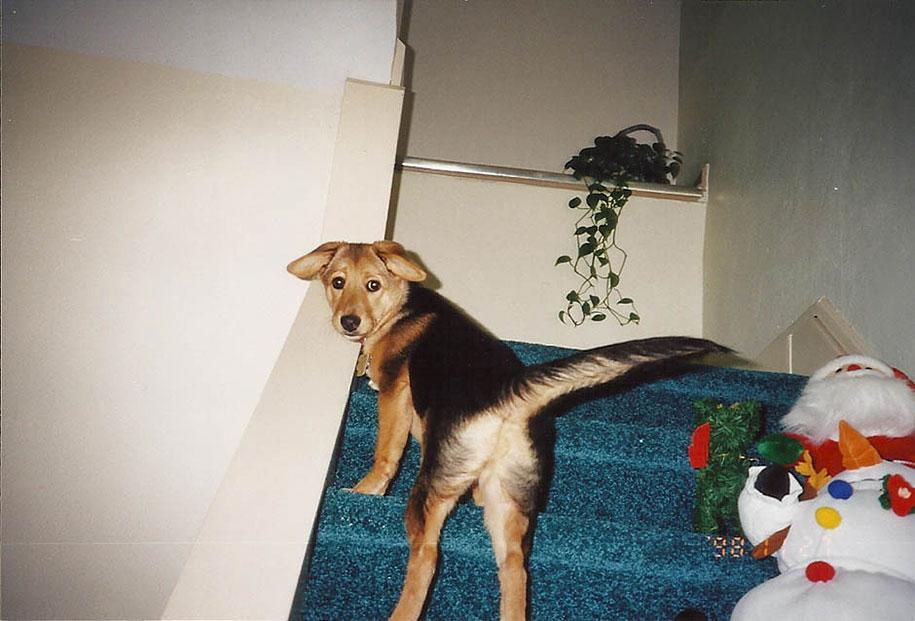 chubby-dog-memorial-photoshoot-maria-sharp-suzanne-price-4