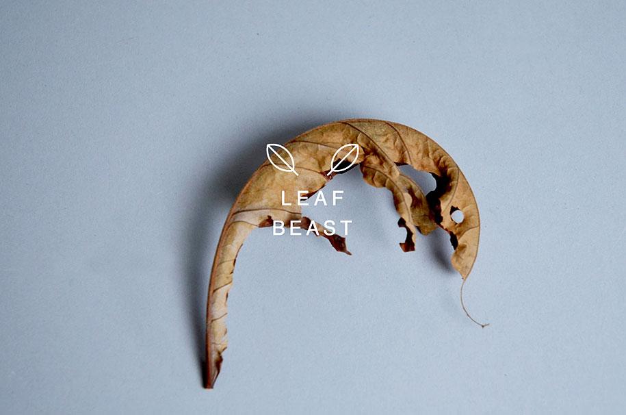 leaf-beast-magnolia-obovata-natural-art-baku-maeda-3
