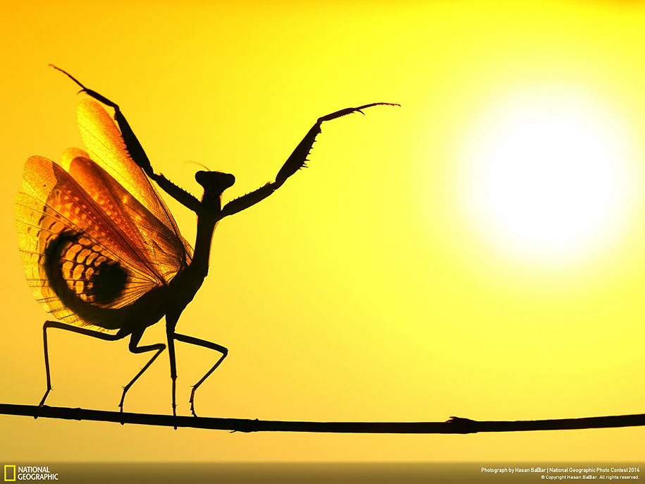 national-geographic-photo-contest-2014-entries-17