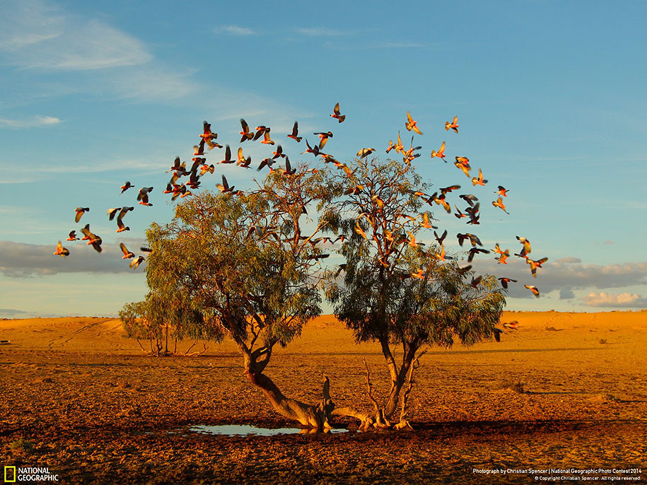 national-geographic-photo-contest-2014-entries-20