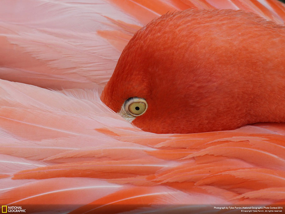 national-geographic-photo-contest-2014-entries-28