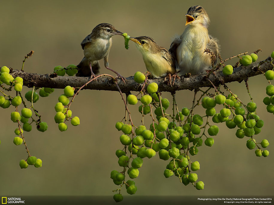 national-geographic-photo-contest-2014-entries-29