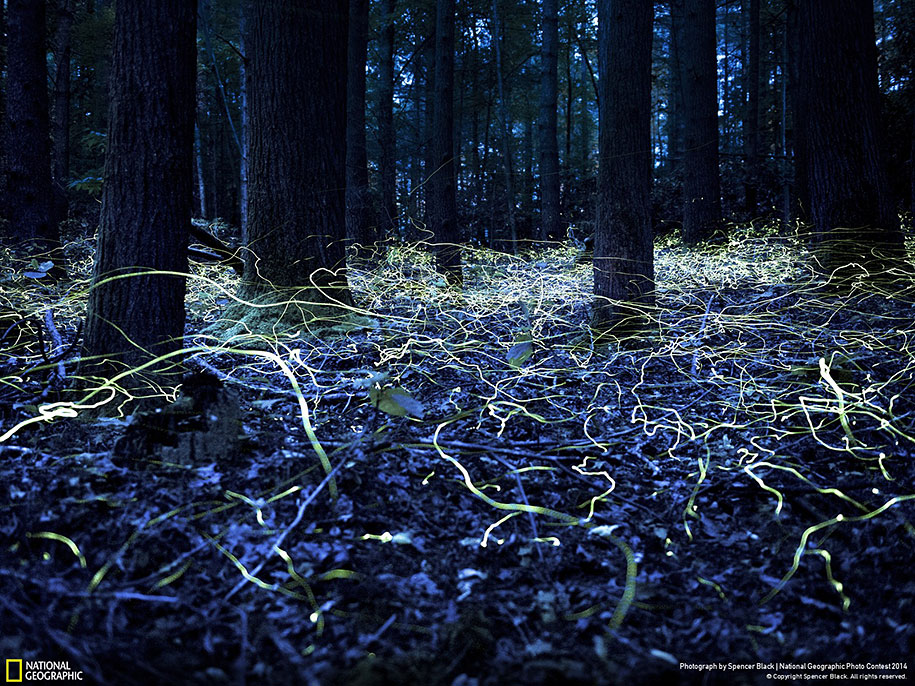 national-geographic-photo-contest-2014-entries-6