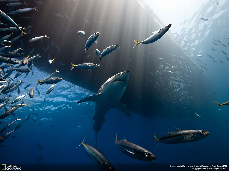 national-geographic-photo-contest-2014-entries-9
