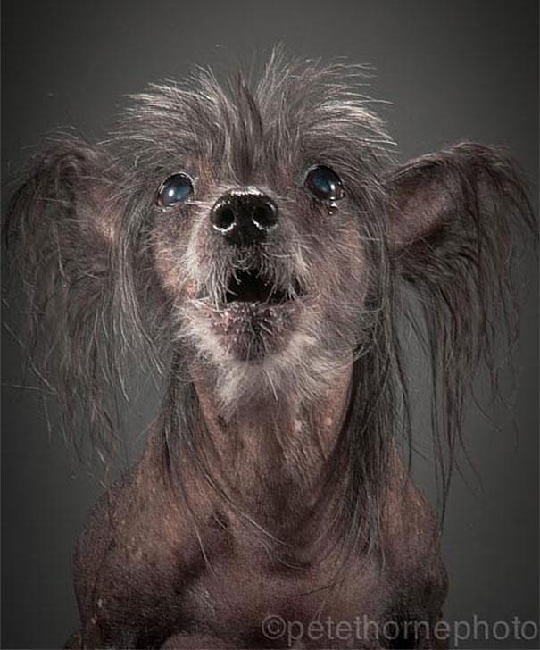 old-faithful-old-dog-portrait-photography-pete-thorne-5