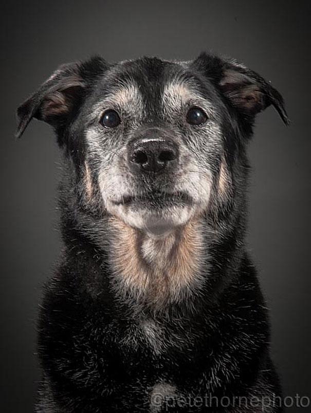 old-faithful-old-dog-portrait-photography-pete-thorne-9