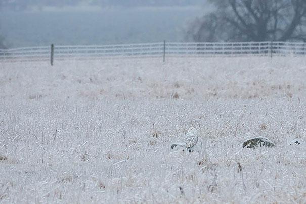 owls-comouflage-nature-photography-11