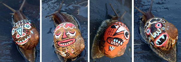 painted-snail-shell-art-1