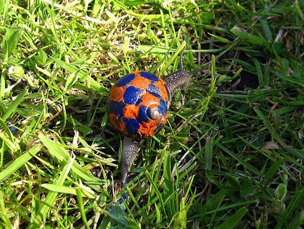 painted-snail-shell-art-10