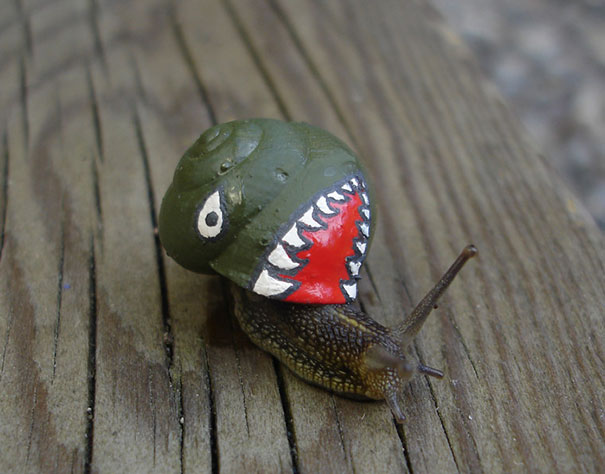 painted-snail-shell-art-16