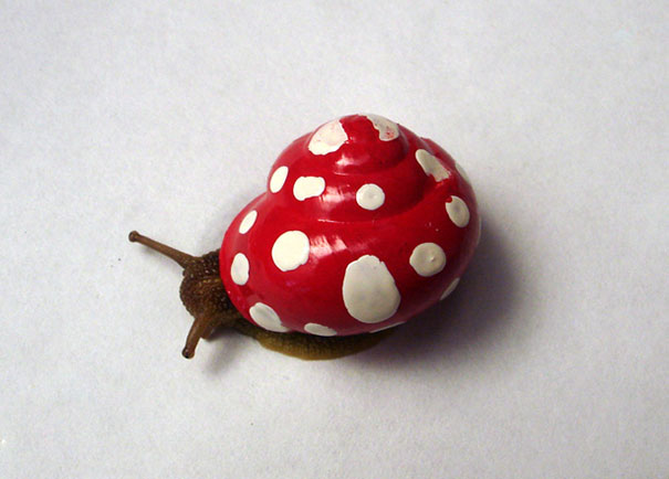 painted-snail-shell-art-18
