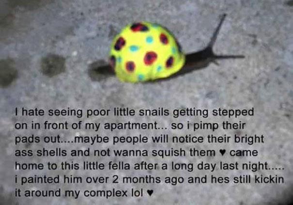 painted-snail-shell-art-8