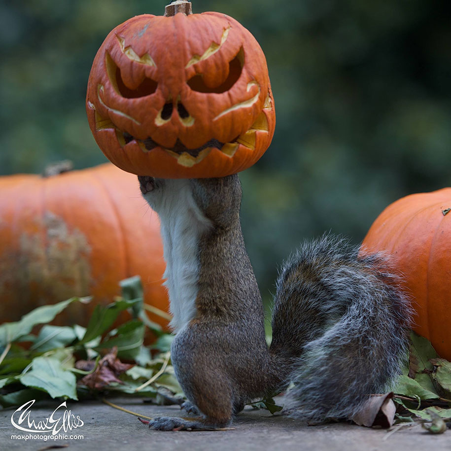 squirrel-pumpkin-funny-photography-max-ellis-1