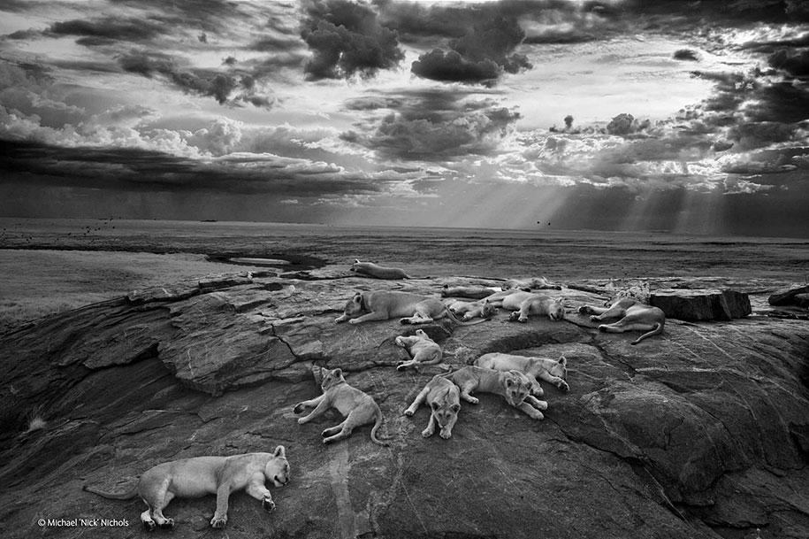 wildlife-photographer-of-the-year-2014-awards-1