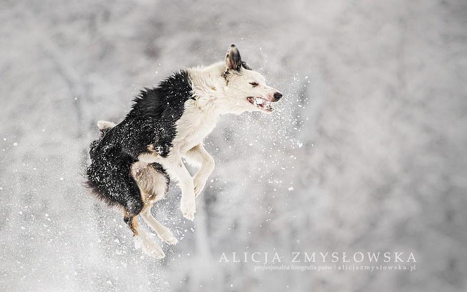 animals-dog-photography-alicja-zmyslowska-10