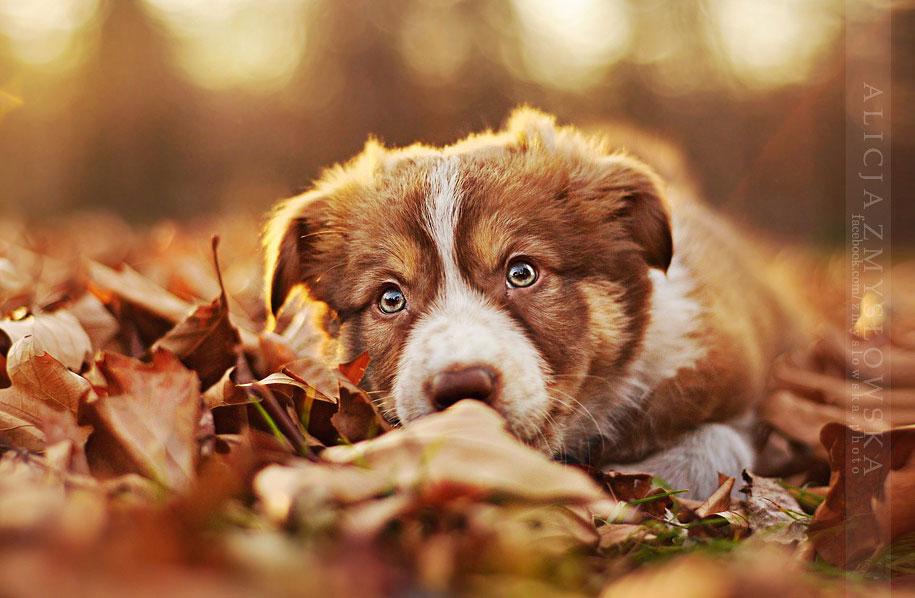 animals-dog-photography-alicja-zmyslowska-11