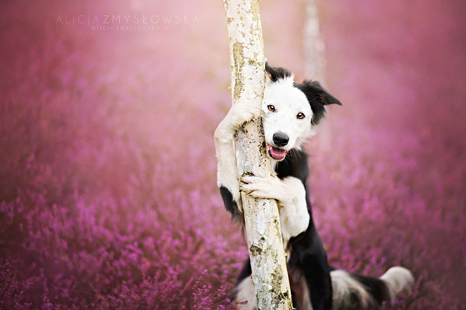 animals-dog-photography-alicja-zmyslowska-12