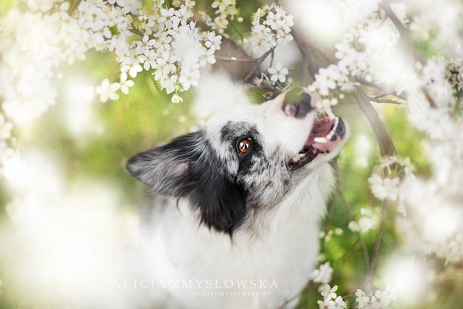 animals-dog-photography-alicja-zmyslowska-15