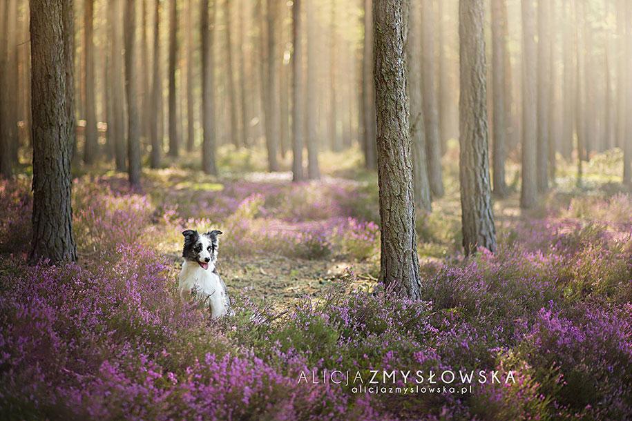 animals-dog-photography-alicja-zmyslowska-17