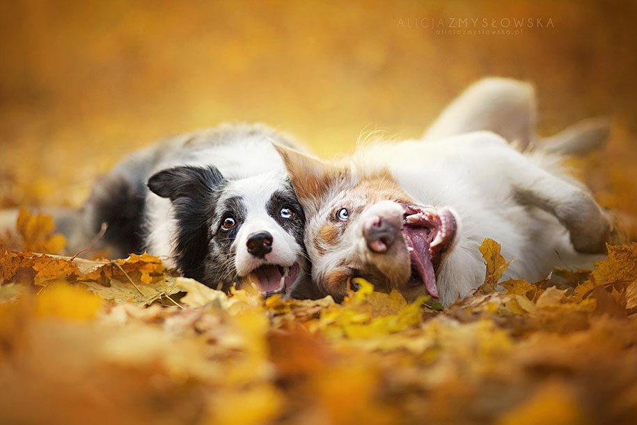 animals-dog-photography-alicja-zmyslowska-19