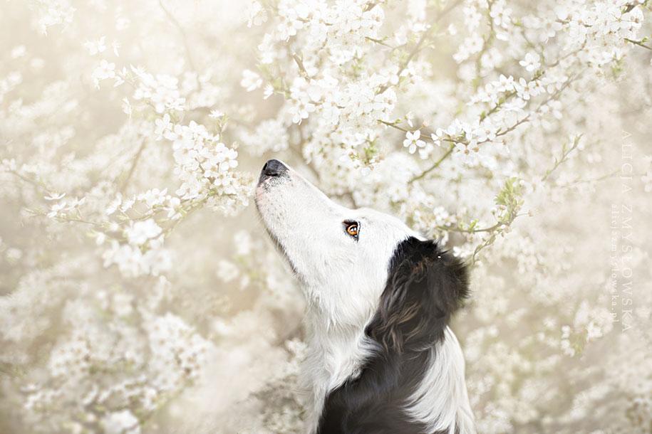 animals-dog-photography-alicja-zmyslowska-5