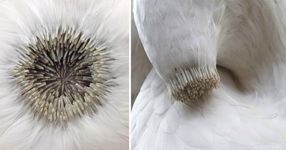 bird-feather-sculpture-art-kate-mccgwire-18