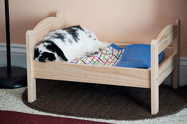duktig-japanese-cat-bed-ikea-12