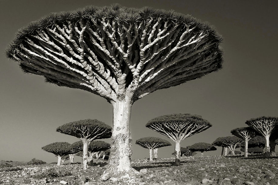 ancient-trees-portraits-of-time-nature-photography-beth-moon-1