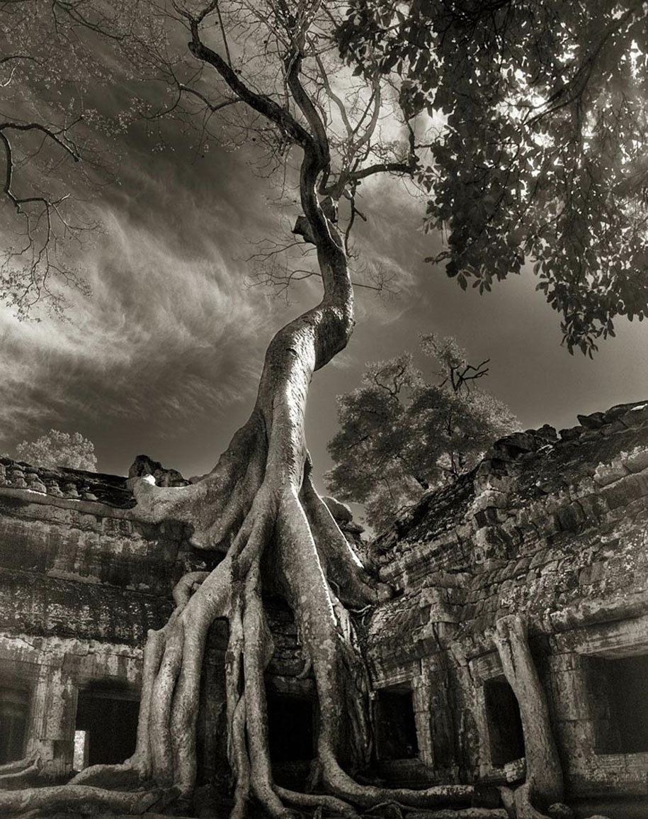 ancient-trees-portraits-of-time-nature-photography-beth-moon-11
