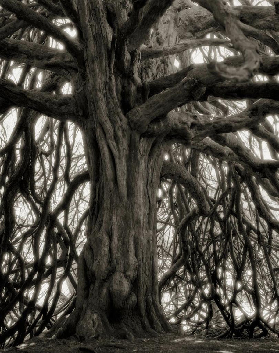 ancient-trees-portraits-of-time-nature-photography-beth-moon-12