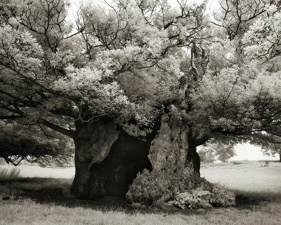 ancient-trees-portraits-of-time-nature-photography-beth-moon-14