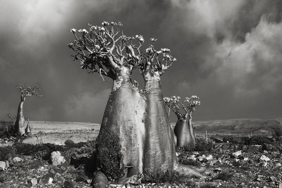 ancient-trees-portraits-of-time-nature-photography-beth-moon-15