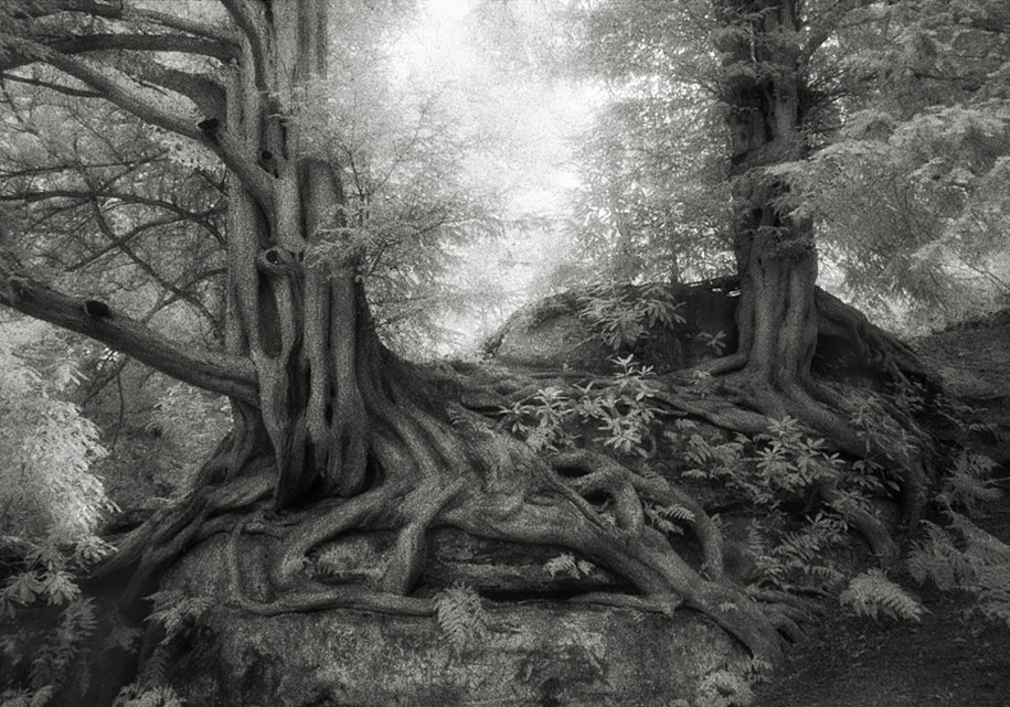 ancient-trees-portraits-of-time-nature-photography-beth-moon-4
