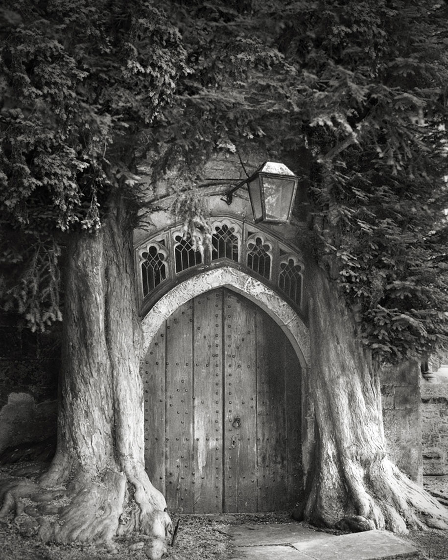 ancient-trees-portraits-of-time-nature-photography-beth-moon-5