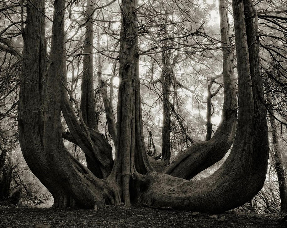ancient-trees-portraits-of-time-nature-photography-beth-moon-8