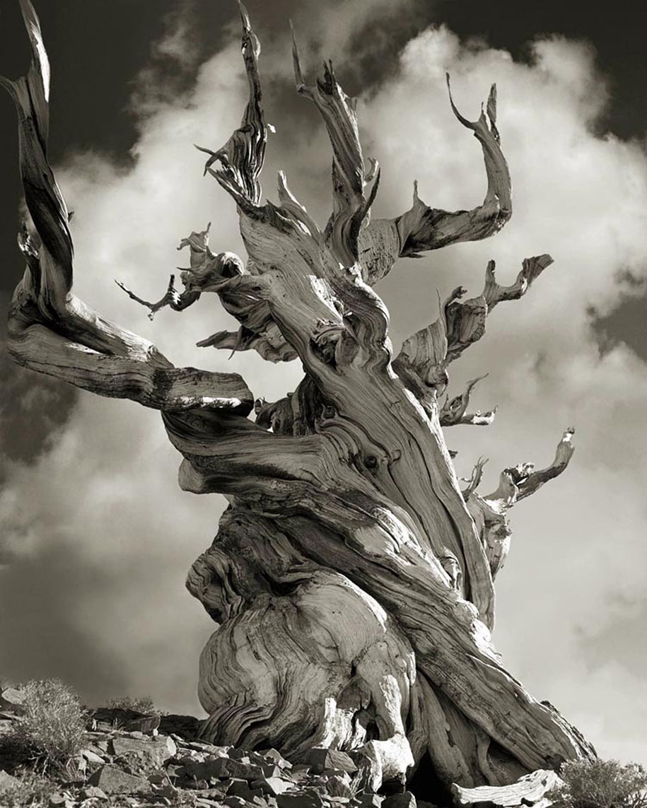 ancient-trees-portraits-of-time-nature-photography-beth-moon-9