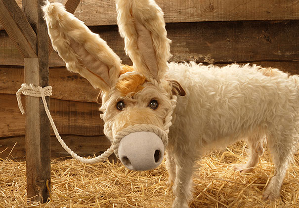christmas-dog-costume-holiday-card-peter-thorpe-2