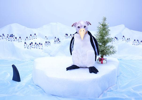 christmas-dog-costume-holiday-card-peter-thorpe-8