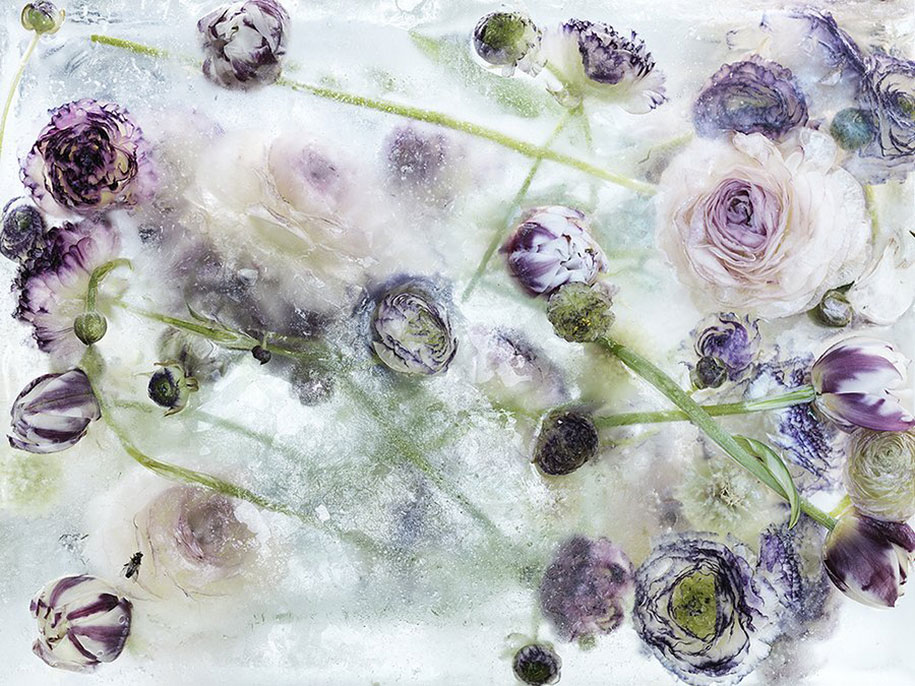 locked-in-the-ether-frozen-flowers-kenji-shibata-3