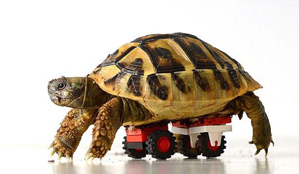 tortoise-lego-wheelchair-carsten-plischke-1