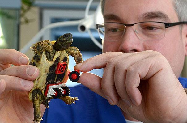 tortoise-lego-wheelchair-carsten-plischke-2