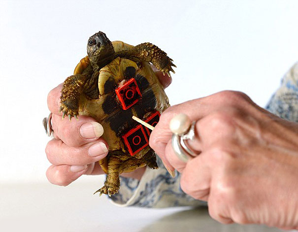 tortoise-lego-wheelchair-carsten-plischke-3