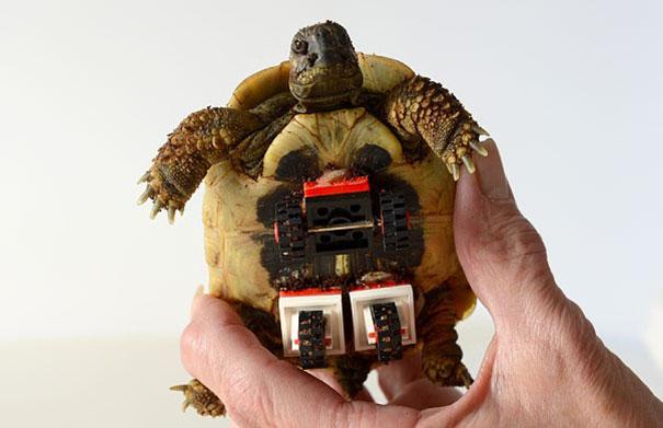 tortoise-lego-wheelchair-carsten-plischke-5