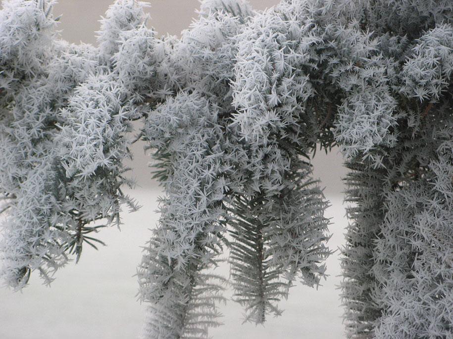 winter-snow-natural-ice-art-20