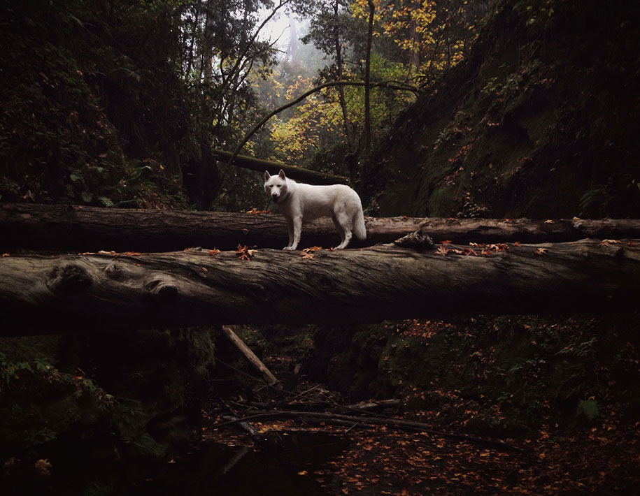 wolf-dog-adventures-travel-photography-john-stortz-11