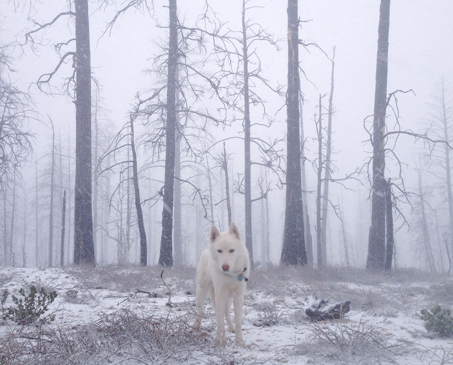 wolf-dog-adventures-travel-photography-john-stortz-15