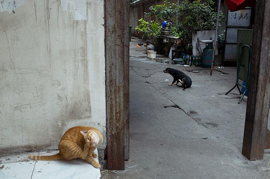 china-perfectly-timed-street-photography-tao-liu-24
