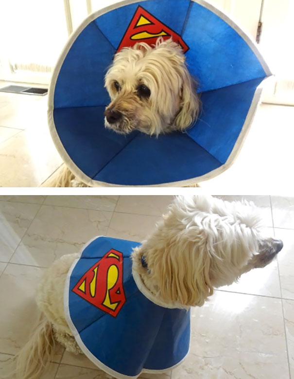 funny-pet-cones-creative-elizabethan-collars-11
